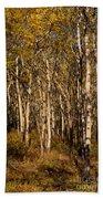Aspen Forest In Fall Beach Towel