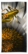 Australian Grasshopper On Flowers. Spring Concept Beach Towel