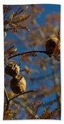 Autumn Coniferous Beach Towel