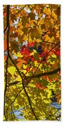 Autumn Maple Leaves Beach Towel