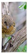 Baby Robin Beach Towel