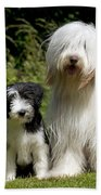 Bearded Collie And Puppy Beach Towel