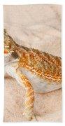Bearded Dragon Pogona Sp. On Sand Beach Towel