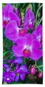 Beautiful Purple Orchid - Phalaenopsis Beach Towel