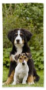 Bernese Mountain & Jack Russell Puppies Beach Towel