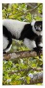 Black And White Ruffed Lemur Madagascar Beach Towel