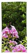 Black Butterfly Beach Towel