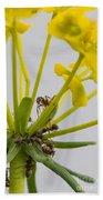 Black Garden Ant On Yellow Flower Beach Towel