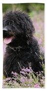 Black Labradoodle Beach Towel