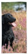 Black Labrador Dog Beach Towel