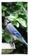 Blue Jay 1 Beach Towel