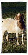 Boer Goat  Beach Towel
