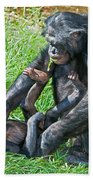 Bonobo Adult And Baby Beach Towel