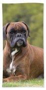 Boxer Dog Beach Towel by Jean-Michel Labat