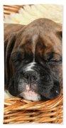 Boxer Puppy Beach Towel