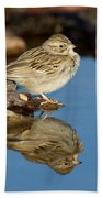 Brewers Sparrow At Waterhole Beach Towel