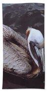 Brown Pelican Beach Towel