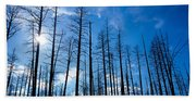 Burnt Pine Trees In A Forest, Grand Beach Towel