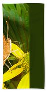 Butterfly Mimicry Beach Towel