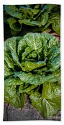 Butterhead Lettuce Beach Towel