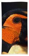 Cabots Tragopan Pheasant Beach Towel