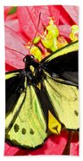 Cairns Birdwing Butterfly Beach Towel