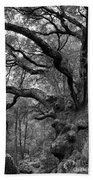 California Black Oak Tree Beach Towel