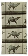 Camel Beach Towel