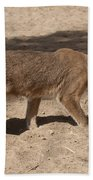 Caracal  Beach Towel