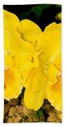 Cattleya Orchid Beach Towel
