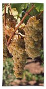 Chardonnay Grapes In Vineyard, Carneros Beach Towel