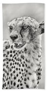 Cheetah Beach Towel by Adam Romanowicz