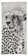 Cheetah Beach Sheet