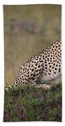 Cheetah On Termite Mound Beach Towel
