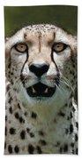 Cheetah Portrait Beach Towel