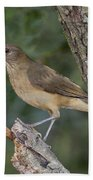 Clay-colored Thrush Beach Towel