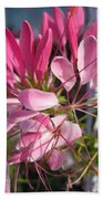 Cleome Named Cherry Queen Beach Towel