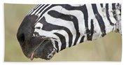 Close-up Of A Burchells Zebra Equus Beach Towel
