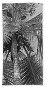 Coconut Palm Beach Towel