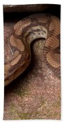 Colombian Rainbow Boa Epicrates Maurus Beach Sheet