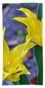 Colors Of Spring Beach Towel
