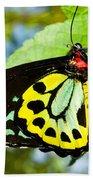 Common Birdwing Butterfly Beach Towel