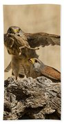 Common Kestrel Falco Tinnunculus Beach Towel