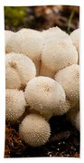 Common Puffball Mushrooms Lycoperdon Perlatum Beach Towel