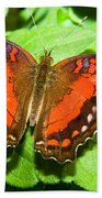 Coolie Butterfly Beach Towel