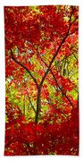 Crimson Window Beach Towel