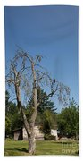 Dead Tree With Crow Beach Towel