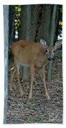 Deer 1 Beach Towel