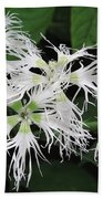 Dianthus Superbus - White Beach Towel