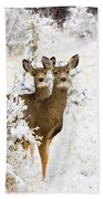 Doe Mule Deer In Snow Beach Towel